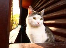 Przybłąkany kot na wiejskiego kraju blokowym domu Obrazy Royalty Free