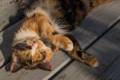Przybłąkany kot odpoczywa na ławce zdjęcie royalty free