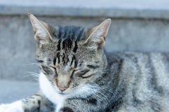 Przybłąkany kot outdoors Zdjęcia Royalty Free