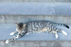 Przybłąkany kot outdoors Zdjęcia Stock