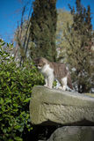 Przybłąkany kot przy antycznymi ruinami 3 obraz stock