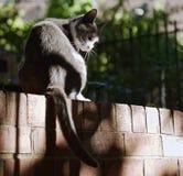 Przybłąkany kota życie Zdjęcia Royalty Free