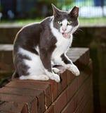 Przybłąkany kota życie Fotografia Stock