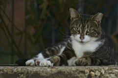 Przybłąkany kota życie Zdjęcie Stock