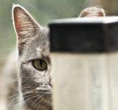 Przybłąkany kota życie Obrazy Stock