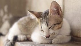 Przybłąkany kota dosypianie na ścianie zbiory