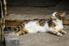 Przybłąkany kota lying on the beach w cementowej podłoga zdjęcie royalty free