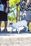 Przybłąkany kota odprowadzenie wśród turystów na brzeg Jeziorny Kerkini, Grecja zdjęcia stock