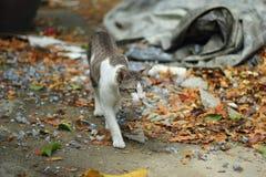 Przybłąkany kota spacer daleko od na podłoga Fotografia Stock
