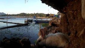 Przybłąkany męski biały królik wędruje przy brzeg zbiory
