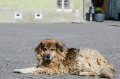 Przybłąkany pies Fotografia Royalty Free