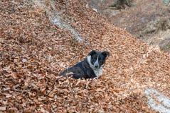 Przybłąkany pies Obraz Royalty Free