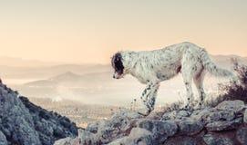 Przybłąkany pies bada majestatyczną halną scenę fotografia stock