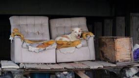 Przybłąkany pies na awaryjnym karle Zdjęcia Royalty Free