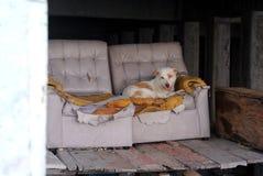 Przybłąkany pies na awaryjnym karle Fotografia Royalty Free