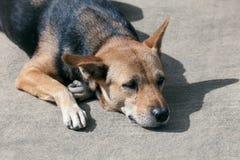 Przybłąkany pies odpoczywa na bocznej drodze Obrazy Royalty Free