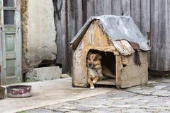 Przybłąkany pies odpoczywa w klatce z łańcuchem wokoło jego szyi Fotografia Stock
