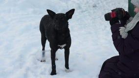 Przybłąkany pies patrzeje w kamera obiektyw zdjęcie wideo