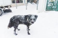 Przybłąkany pies w zimie obraz stock