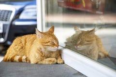 Przybłąkany pomarańczowy tabby kot odpoczywa na sklepu okno parapecie obrazy stock