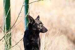 Przybłąkany przybłąkany pies w jesień lesie Fotografia Stock