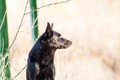 Przybłąkany przybłąkany pies w jesień lesie Zdjęcie Royalty Free