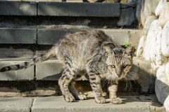 Przybłąkany smutny kot Fotografia Stock
