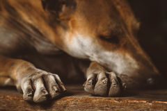Przybłąkanych psów odczucia boredc Zdjęcie Stock