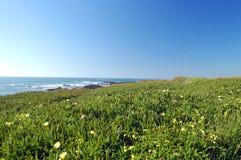 przybrzeżną wiosny łąkowa Obrazy Stock