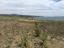 Przybrzeżna równina Południowy Kalifornia z wildflowers i widok na ocean obraz stock