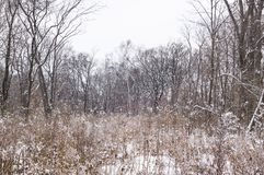 przychodzący zima Śnieżny pole i cisza w lesie zdjęcia stock