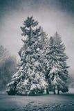 przychodzący zima zdjęcie stock