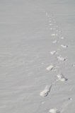 Przychodzić od śnieżnych śladów istota ludzka daleko wewnątrz zdjęcia royalty free