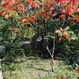Przychodził my piękni - jesień zdjęcia royalty free