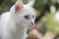 Przyciąga natury ` s cudu zwierzęta Fotografia Stock