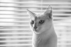 Przyciąga natury ` s cudu zwierzęta Fotografia Royalty Free