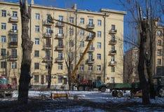 Przycinać starych wysokich drzewa w mieście zdjęcie stock
