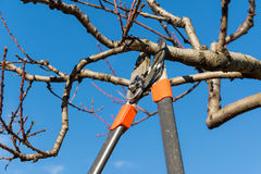 Przycinać drzewa Fotografia Royalty Free