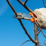 Przycinać drzewa Zdjęcie Stock