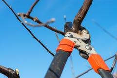 Przycinać drzewa Zdjęcia Stock