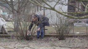 Przycina krzaki i drzewa zbiory