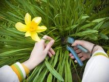 przycinanie kwiat Zdjęcie Stock
