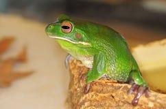 przygląda się żaby ampułę Zdjęcia Stock