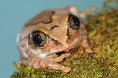przygląda się żaby ampułę Obrazy Royalty Free