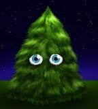 przygląda się jedlinowego puszystego drzewa Zdjęcia Royalty Free