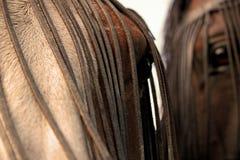 przygląda się konie Obrazy Stock