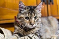 Przygląda się kota Obrazy Royalty Free
