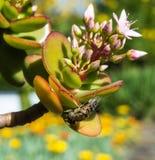 przyglądająca się kwiat komarnica na chabet roślinie fotografia stock