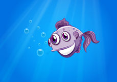 Przyglądająca się ryba Zdjęcia Royalty Free