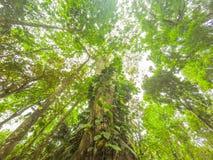 Przyglądającego inside tropikalny tropikalny las deszczowy, dżungla las up/ Zdjęcia Stock